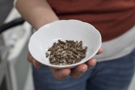Little food insectes comestibles Bruxelles - HOTPOPOTE